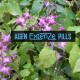 Manfaat Gulma Kambing Horny Dalam Obat Pembesar Extenze